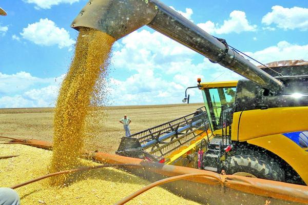 Cultivar soja está 12,7% mais caro