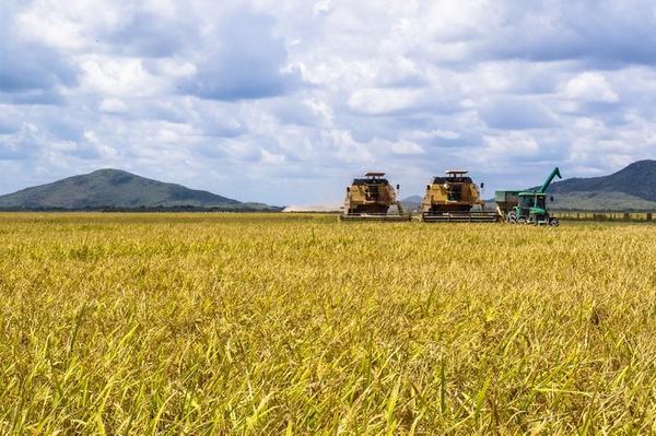 Valor da Produção Agropecuária é de R$ 697 bilhões, o maior dos últimos 31 anos