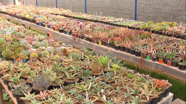 Moradora de Araçoiaba da Serra coleciona mais de 5 mil espécies de suculentas