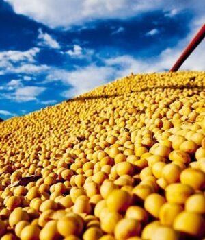 Produção de soja e milho em MT vai crescer na safra 2021/22, diz jornal