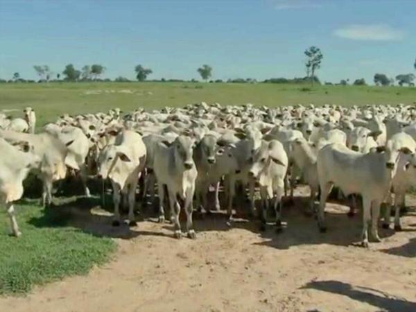 Acrimat discorda da suspensão de exportação de carne para China e diz que medida pode interferir no valor dos animais para abate