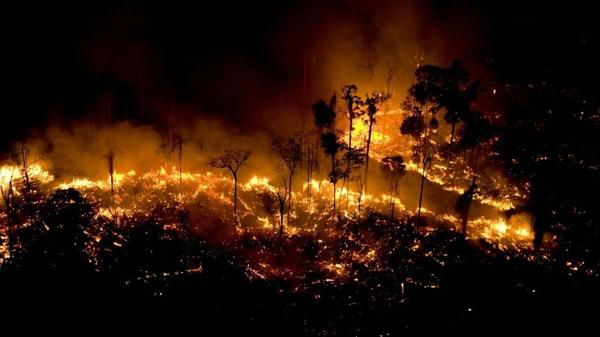 Floresta Amazônica é rica em biodiversidade, mas não é o pulmão do mundo