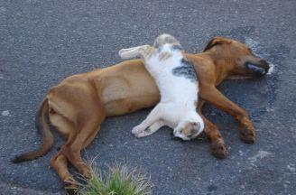 Vizinho é acusado de envenenar cão e gatos em Sinop